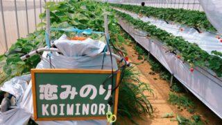 BERRYHOUSE宮古島さんで、無農薬のいちご狩り体験してきたよ!